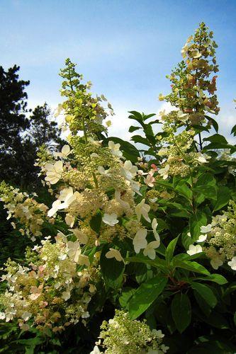 White Flowers copyWEB