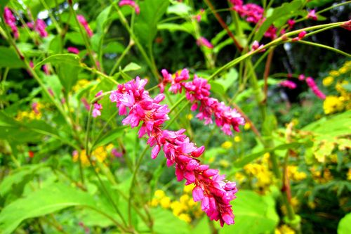 Pink Flowers copyWEB