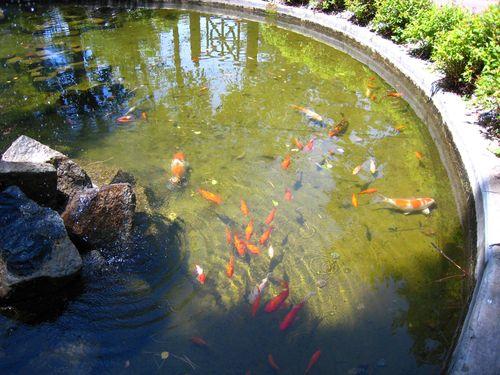 Fishies copyWEB